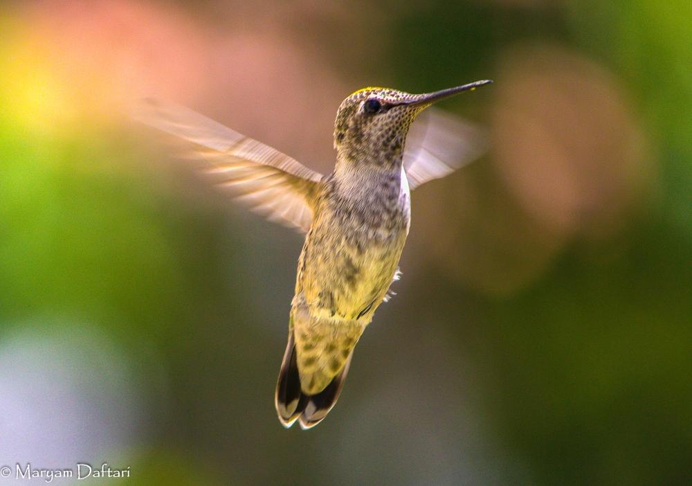 humming1-2